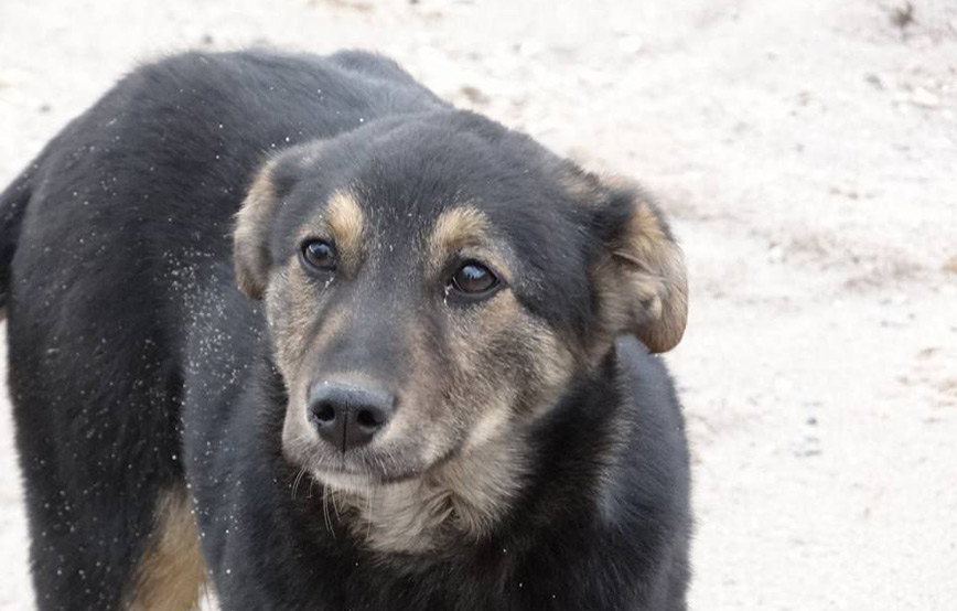 schwarzer-hund-Balto-im-winter Diese Fellnasen konnten wir zu uns ins Dorf holen