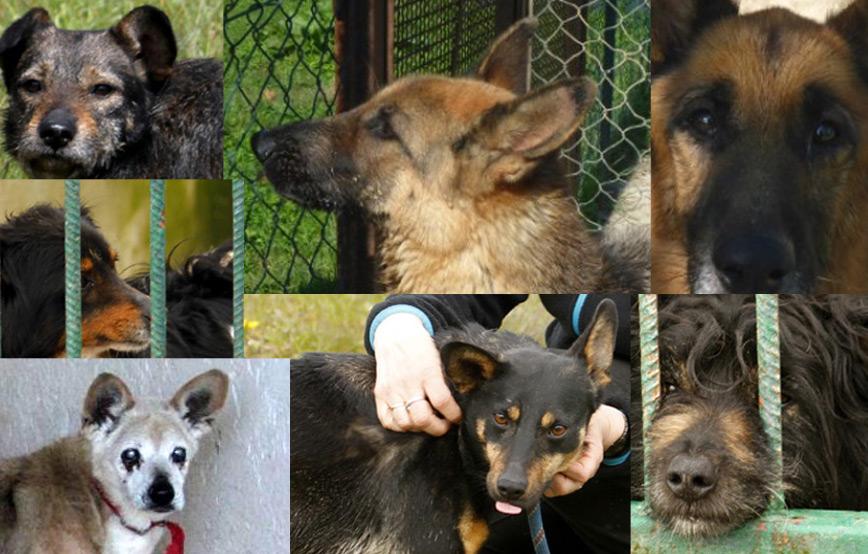 sieben-hunde-suchen-aufnahmepaten Unterstützen Sie das Tierschutzliga-Dorf