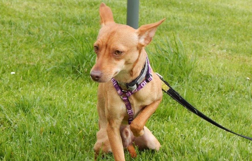 Hund-Timmi-sitzt-im-gras-an-der-leine Veranstaltungen - Tierheim Wollerberg