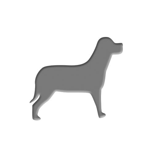 Hund_grau-1 Fachgerechte Krankenstation