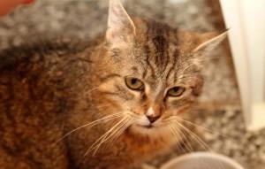 Katze-Erika-steht-auf-dem-boden-neben-futternapf-300x191 Tierschutzliga-Dorf