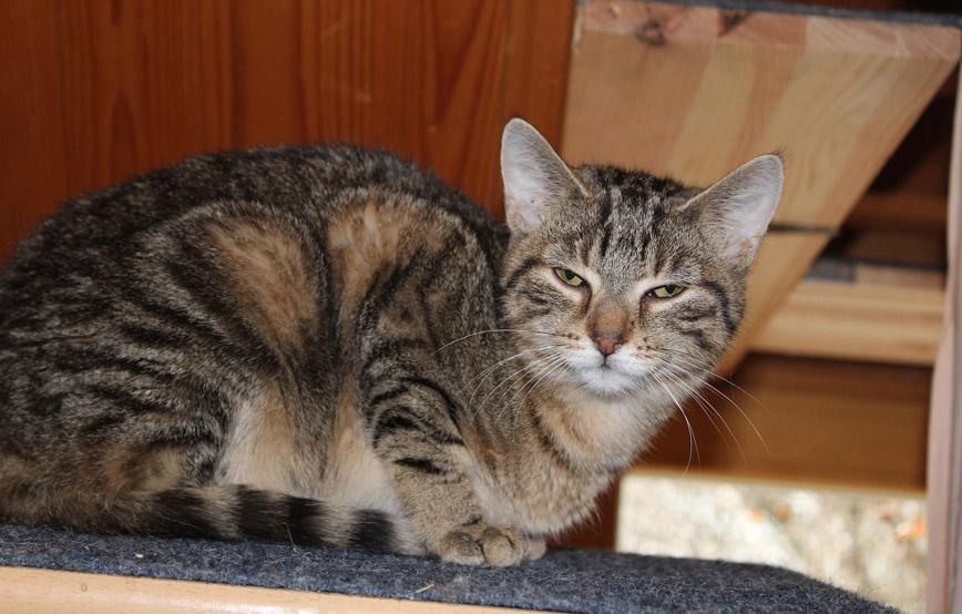 Katze-Hannah-glücklich-vermittelt Glücklich vermittelt - Katzenstation München