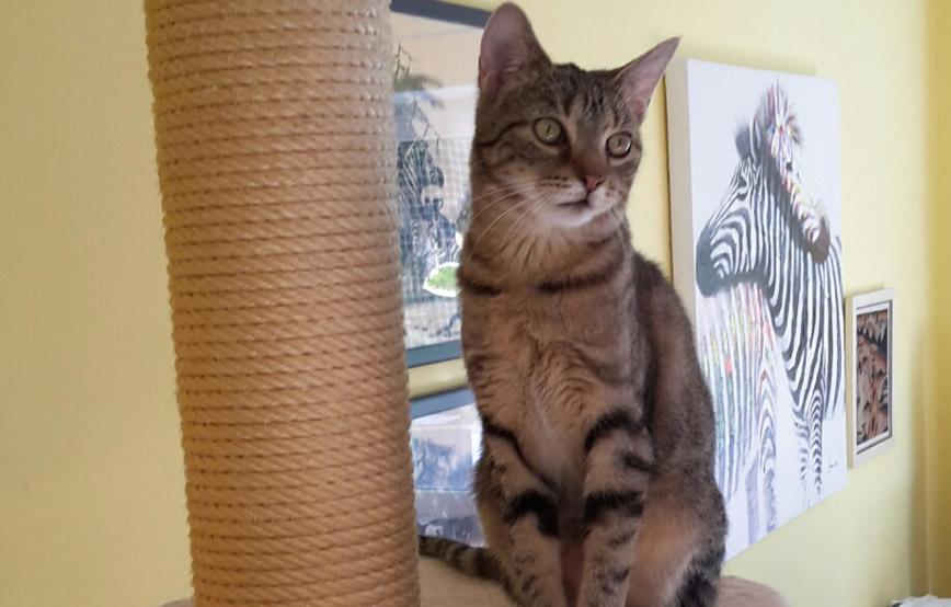 Katze-Hannah-sitzt-auf-dem-kratzbaum Petra braucht ihr Kissen