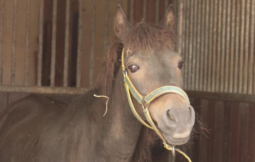 Pferd-tina-steht-im-stall-trauriges Tina - ist in ihrer Box zusammengebrochen
