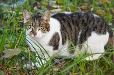 admin-ajax.php_ Fortpflanzung der Katze