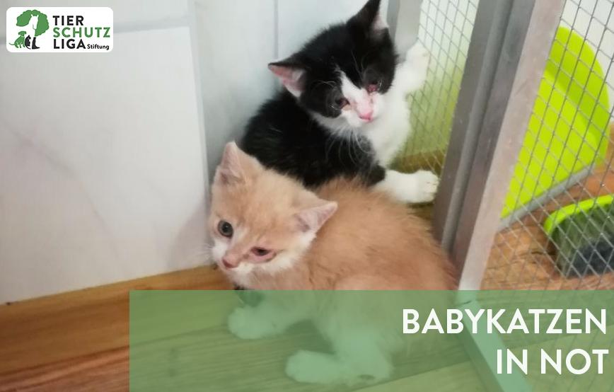 beitragsbild-babykatzen-in-not Tierheim Wollaberg