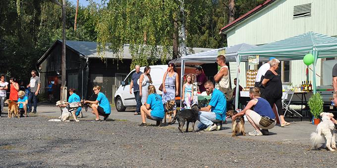 beitragsbild-ehrenamtliches-engagement Mitmachen im Tierschutz