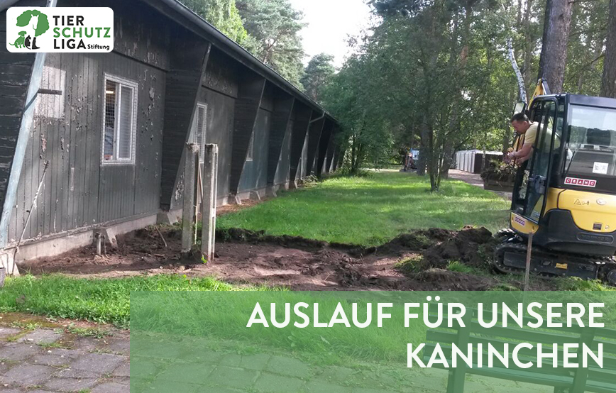 beitragsbild-kaninchen-auslauf-bagger Tierschutzliga-Dorf