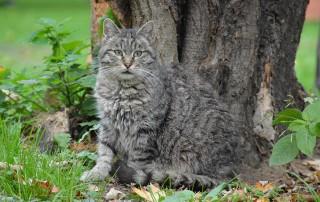 projekt-beitragsbild-fortpflanzung-der-katze-neu-1-320x202 Katzenratgeber