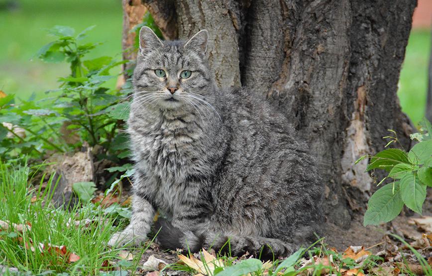 Fortpflanzung der Katze - 25. Juli 2017