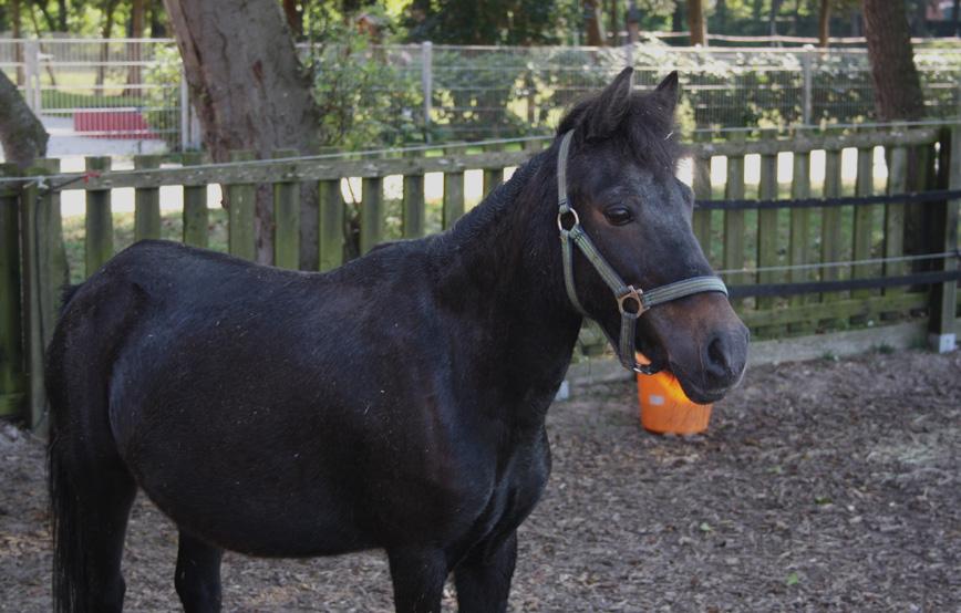 schwarzes-pferd-tina-steht-im-gehege-trauriges Trauriges - Tierschutzhof Wardenburg