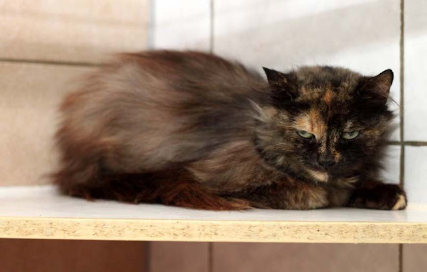 Katze-Johanna-fundtiere Fundtiere - Tierschutzliga Dorf