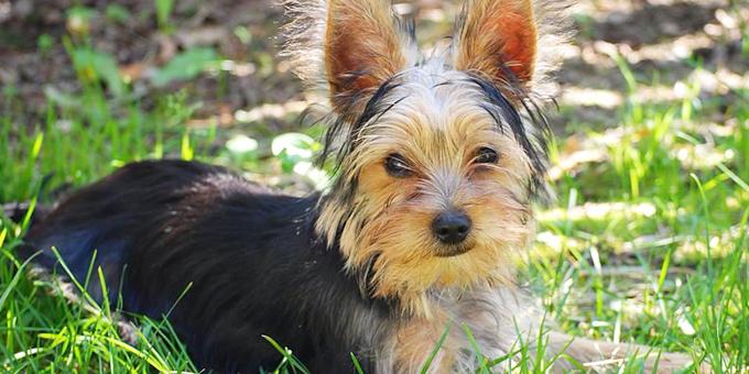 Pate Tierpatenschaft - Tierheimtiere unterstützen