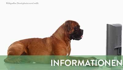beitragsbild-informationen Startseite Tierschutzliga Stiftung