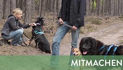 beitragsbild-mitmachen-2 Startseite Tierschutzliga Stiftung