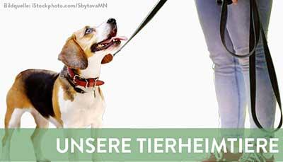 beitragsbild-vermittlung-neu Startseite Tierschutzliga Stiftung