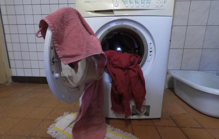 beitragsbild-waschmaschinen Gnadenhof für alte Hunde in Breitenberg - Tierparadies