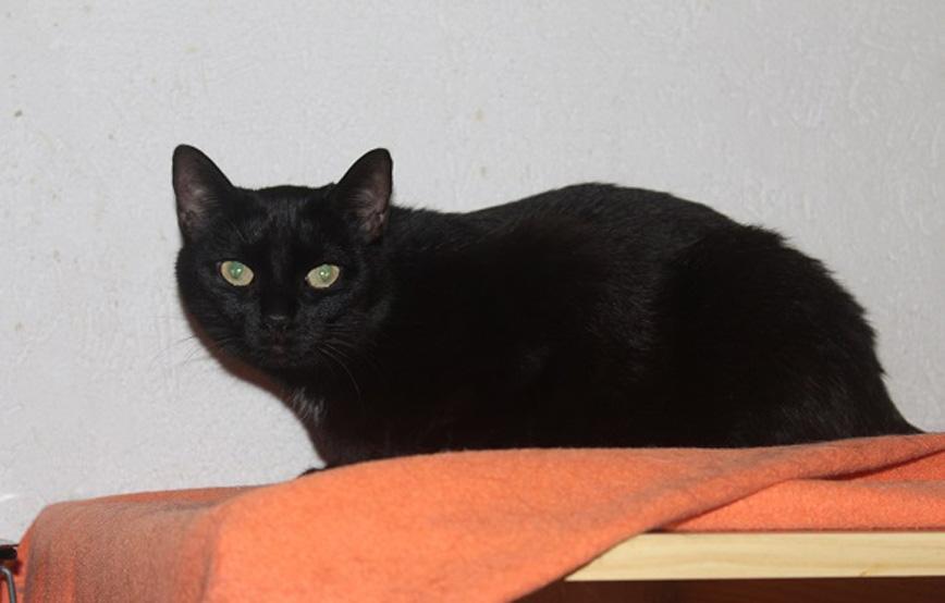 schwarze-katze-Pinky-glücklich-vermittelt Glücklich vermittelt - Katzenstation München