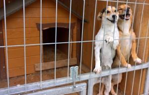 Hunde-Nela-und-Heidi-stehen-am-gitter-300x191 Fünf Hunde haben neue Chance bekommen und dürfen reisen