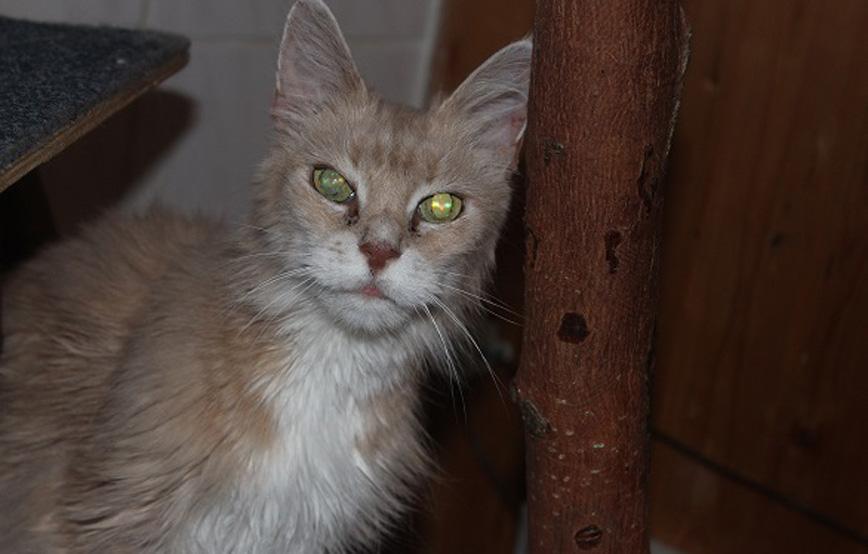 Katze-Cleo-glücklich-vermittelt Glücklich vermittelt - Katzenstation München