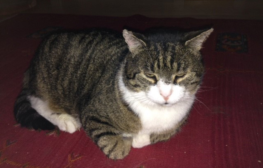 Katze-Tapsi-liegt-auf-dem-teppich-vermittelt Glücklich vermittelt - Katzenstation München