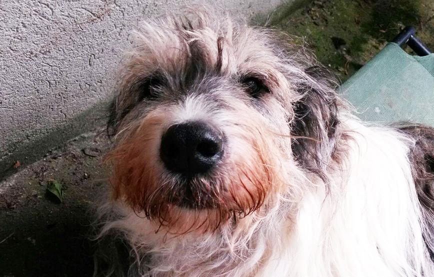beitragsbild-annouschka-zähne-kaputt Abgeschlossene Tierschutz-Projekte