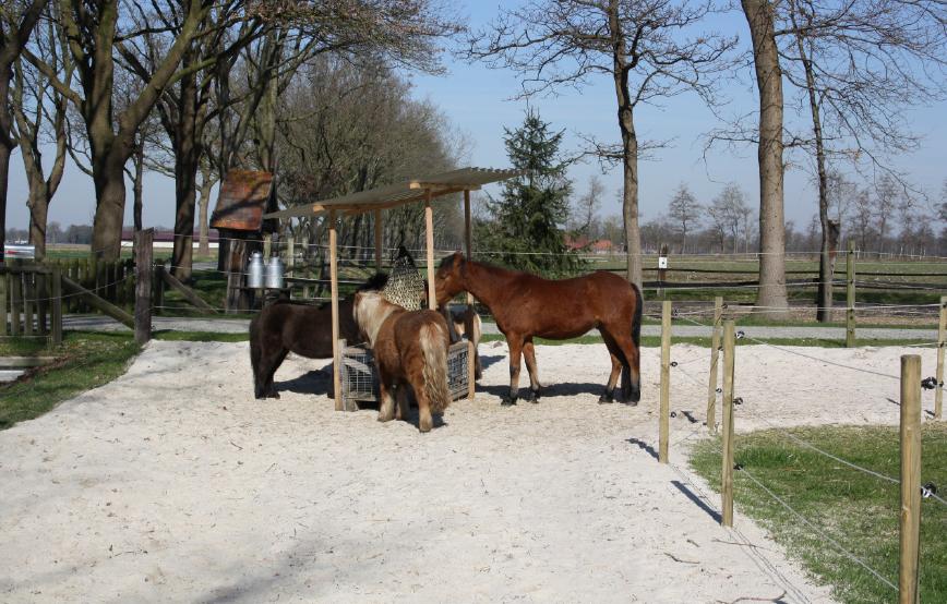 beitragsbild-paddock-trail Tierschutzhof Wardenburg