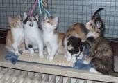 fünf-kleine-katzen-auf-dem-fensterbrett-170x120 Startseite Tierschutzliga Stiftung