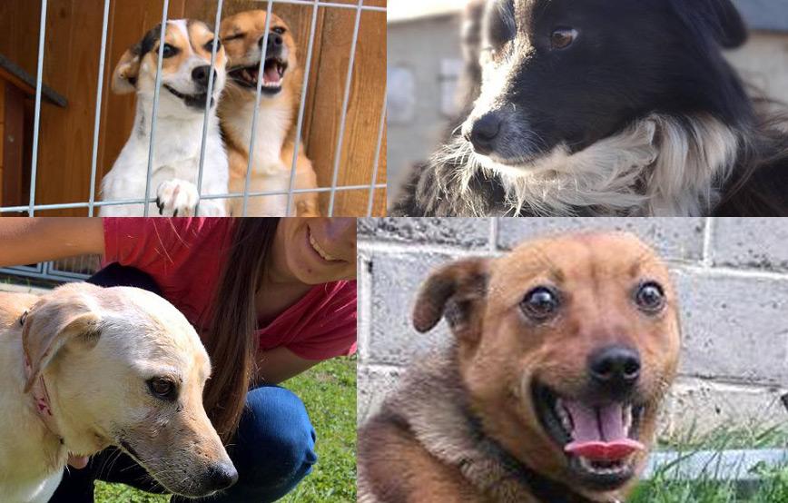 fünf-hunde-dürfen-zu-uns-reisen Startseite Tierschutzliga Stiftung