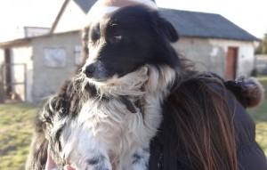 hund-Latek-auf-dem-arm-300x191 Fünf Hunde haben neue Chance bekommen und dürfen reisen