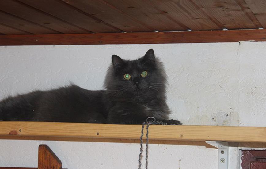schwarze-katze-Esmeralda-auf-einem-regal Glücklich vermittelt - Katzenstation München