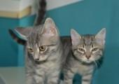 zwei-katzen-in-riedelsbach-170x120 Startseite Tierschutzliga Stiftung