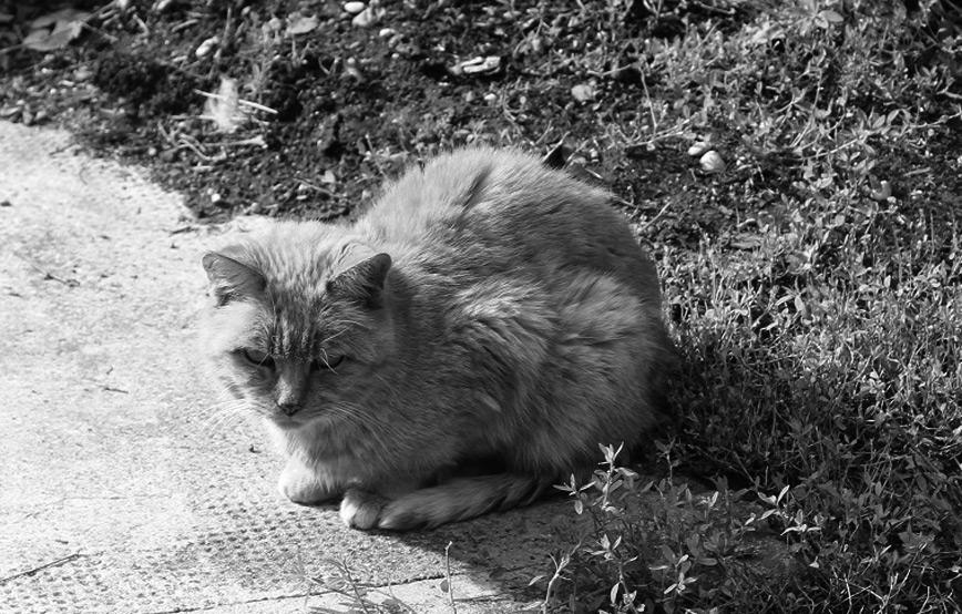 Freigängerkatze-Paula-trauriges Katzenstation München