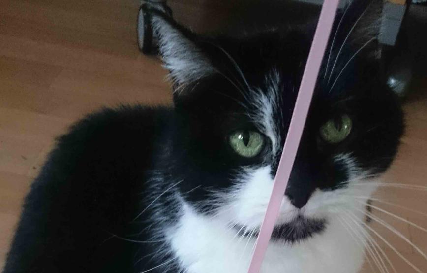 Katze-mit-einem-pinken-faden Tierische Geschichten - Tierschutzliga-Dorf