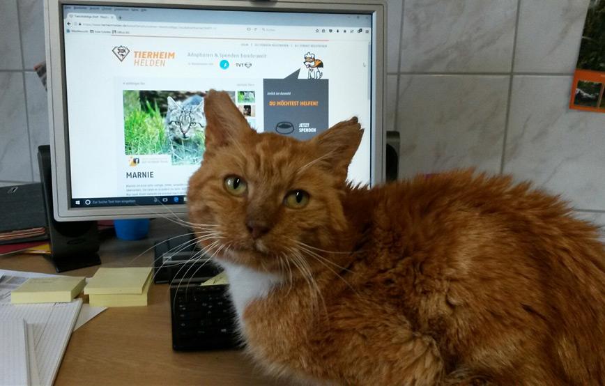 Katze-vor-dem-Computer Tierschutzliga-Dorf