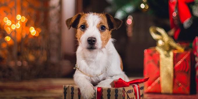 beitragsbild-patenschaft-weihnachten-tier-freude-680x340 Weihnachten mache ich einem Tierheimtier ein Geschenk