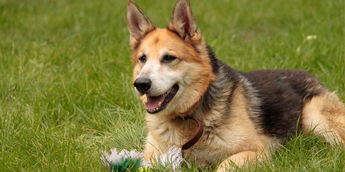 beitragsbild-tierpatenschaften-klein Patenschaften - Tierheime unterstützen
