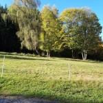 breitenberg-tierparadies-wiese-150x150 Gnadenhof für alte Hunde in Breitenberg - Tierparadies