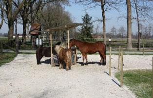 paddock-trail Unterstützen Sie den Tierschutzhof Wardenburg