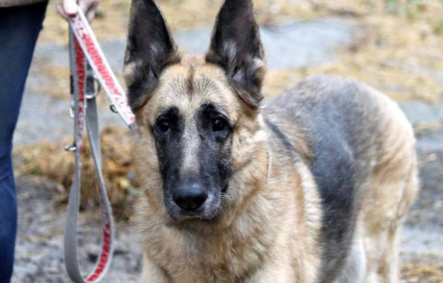 projekt-beitragsbildisabell Startseite Tierschutzliga Stiftung