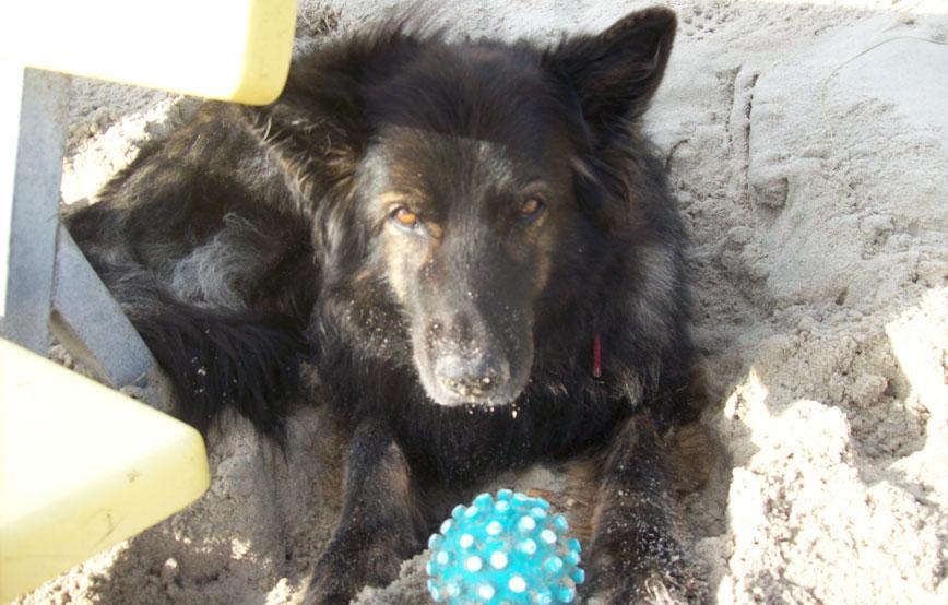 schwarzer-hund-asti-liegt-neben-einer-bank Tierische Geschichten - Tierschutzliga-Dorf