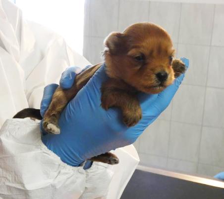 Baby1weibl 31 Hunde und 12 Katzen beschlagnahmt - erbärmliche Zustände