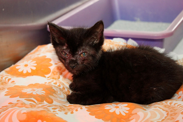 Finja-Griselda-13 Messihaushalt – vierzehn kranke Katzen gerettet – Tierschutz-Alltag