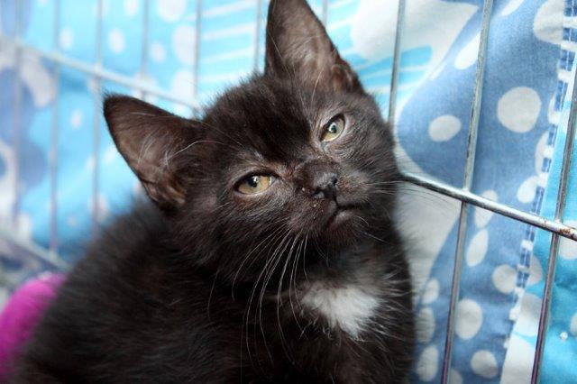 Junge-1-1 Messihaushalt – vierzehn kranke Katzen gerettet – Tierschutz-Alltag