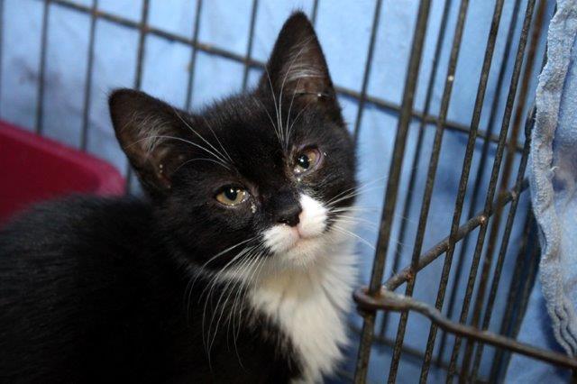 Junge-2-2 Messihaushalt – vierzehn kranke Katzen gerettet – Tierschutz-Alltag