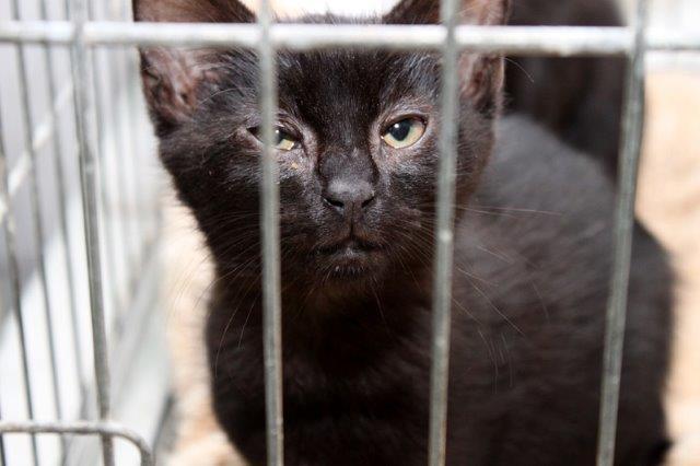 Junge-5-2 Messihaushalt – vierzehn kranke Katzen gerettet – Tierschutz-Alltag