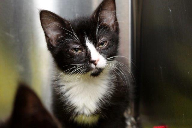 Junge-6-1 Messihaushalt – vierzehn kranke Katzen gerettet – Tierschutz-Alltag