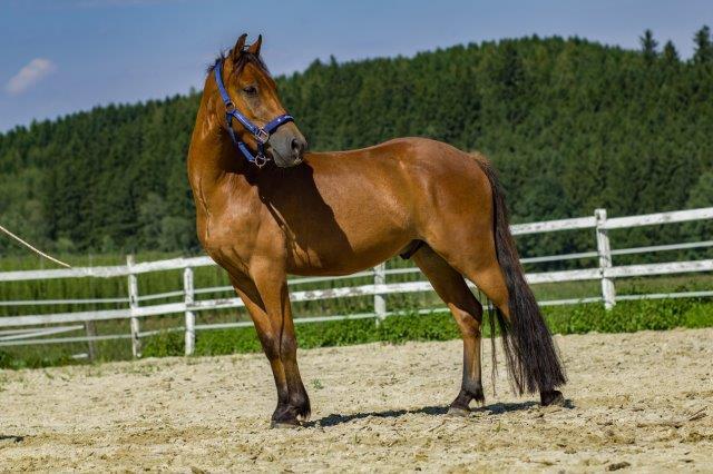 Ketu-im-August-2017 Homöopathie für Pferde - Seminare in Wardenburg