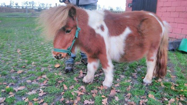 Krümel-mein-Patenkind Homöopathie für Pferde - Seminare in Wardenburg