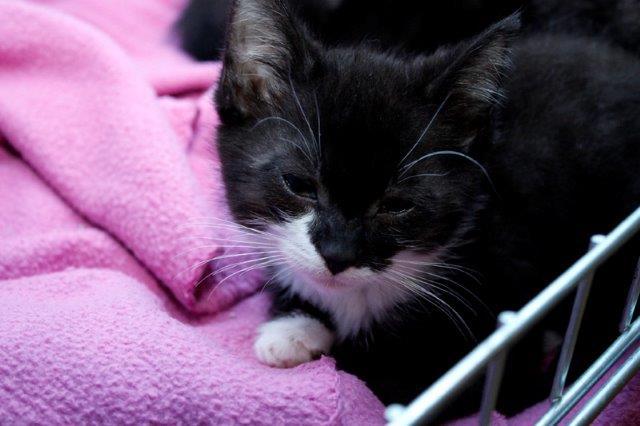 Lady-Giselle-2 Messihaushalt – vierzehn kranke Katzen gerettet – Tierschutz-Alltag
